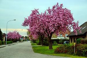 Bäume Für Den Kleinen Garten Marktde