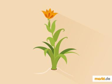Grafik Zierpflanzen
