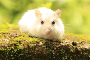 Hamster Bild