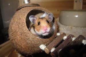 Bild Hamster Spielzeug