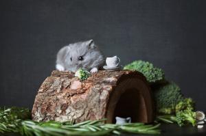 Nachtaktiver Hamster auf Hamsterhaus
