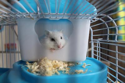 Hamster in Hamsterkäfig