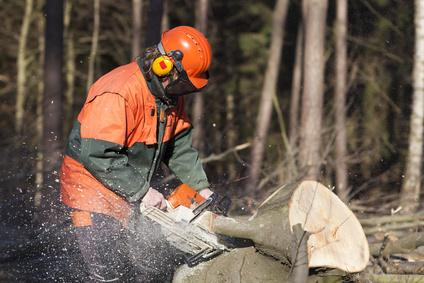 Bild Mann sägt Baum mit passender Ausrüstung