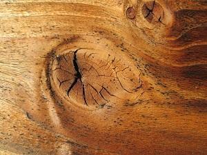 Holz einer Eiche