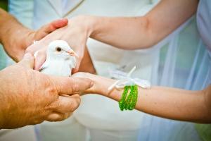 Bild Tauben Hochzeit