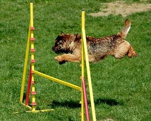Agility Training.