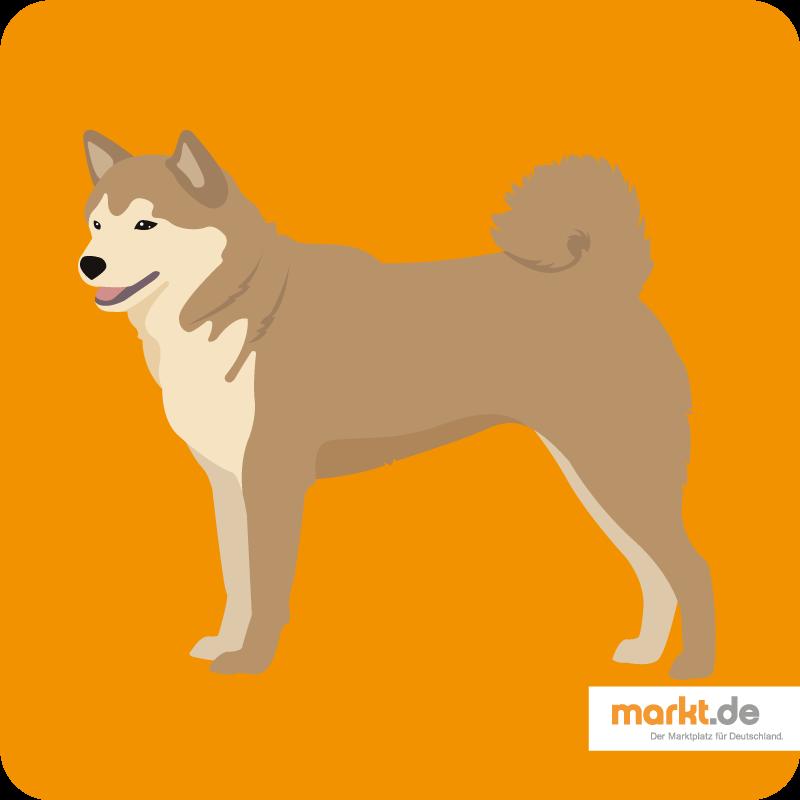 Bild Ainu-Hund