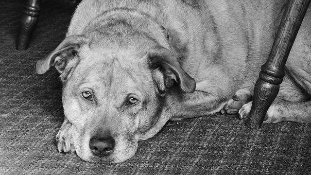 Bild Alter Hund