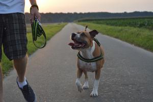 Sachkundenachweis Hund Inhalte Kosten Gesetze Markt De