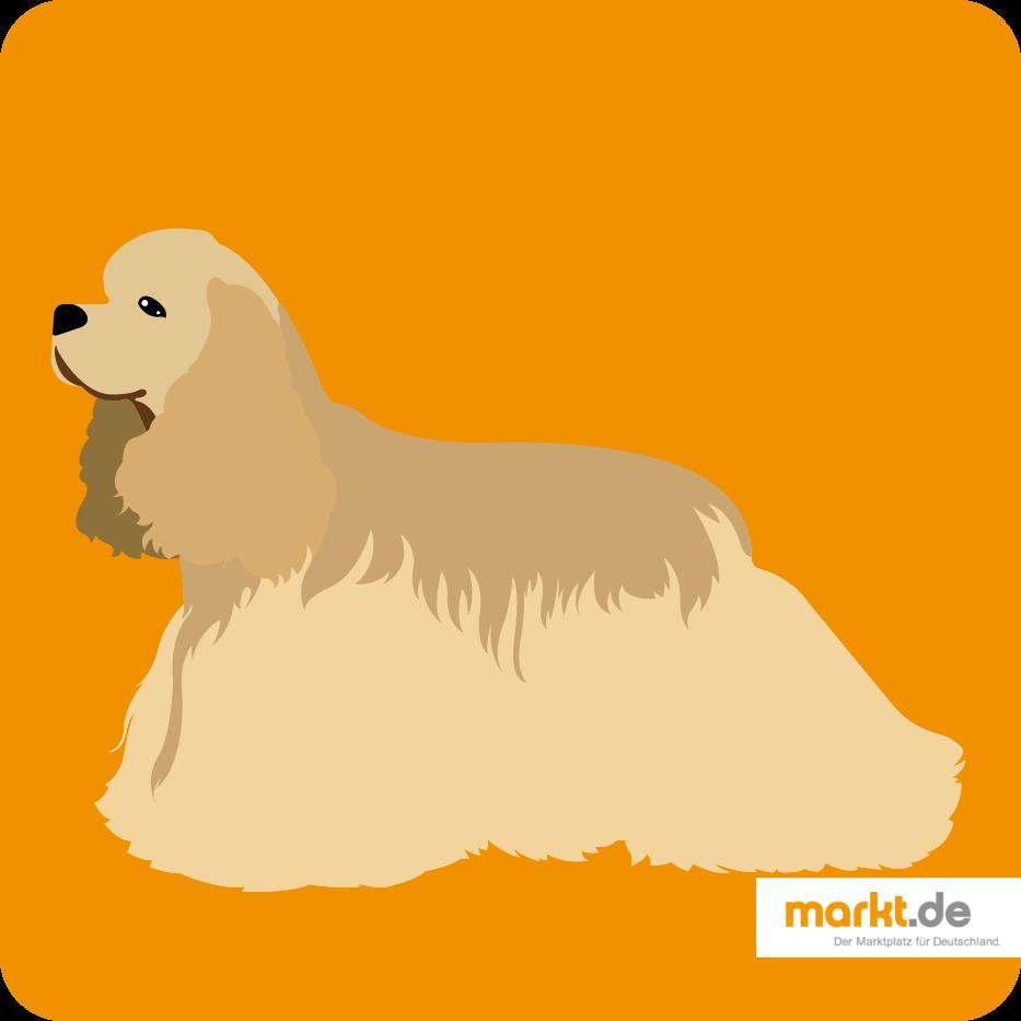 Amerikanischer Pitbull Terrier