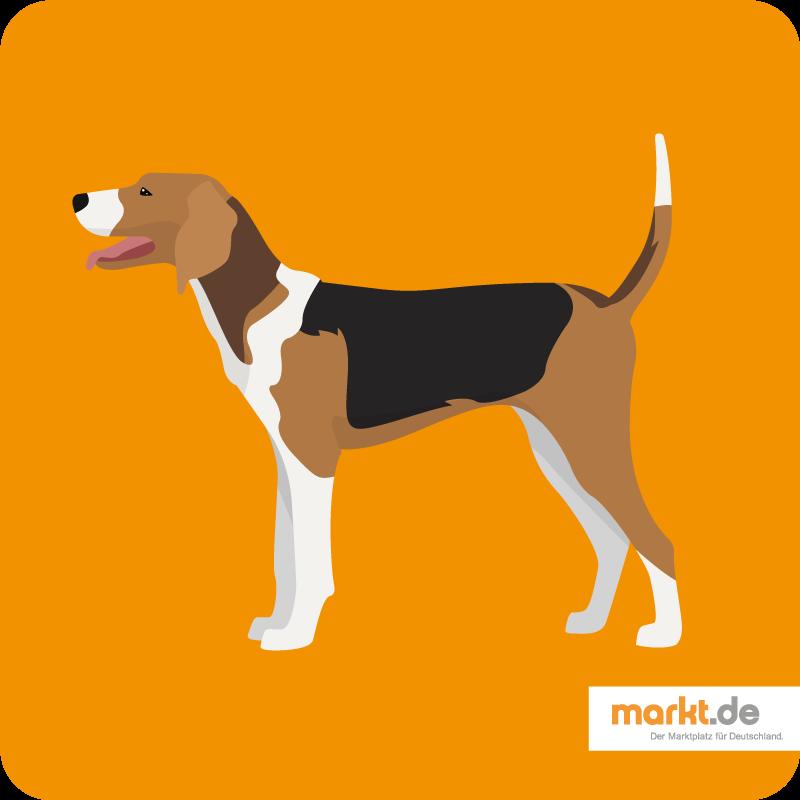 Amerikanischer Foxhound