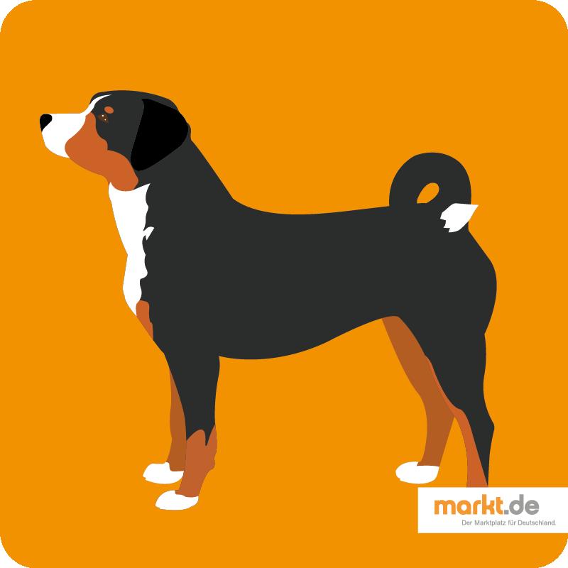 Appenzeller Sennenhund