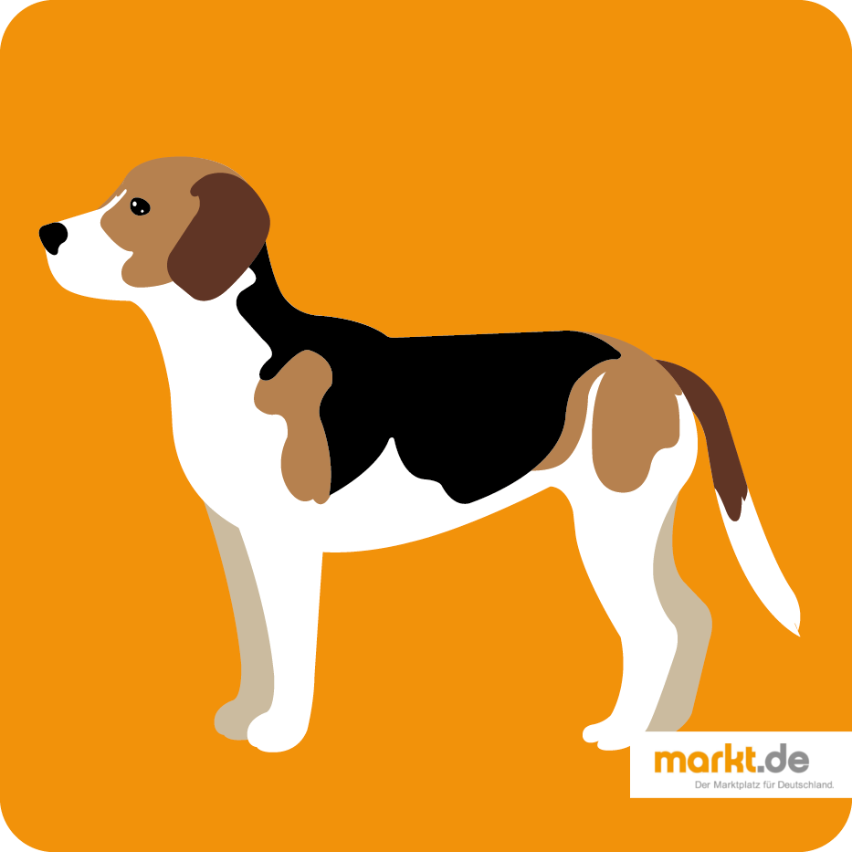 Grafik Beagle