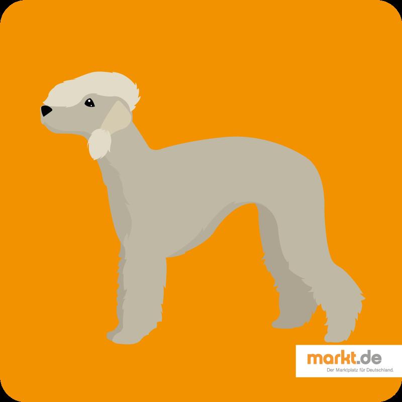 Bild Bedlington-Terrier