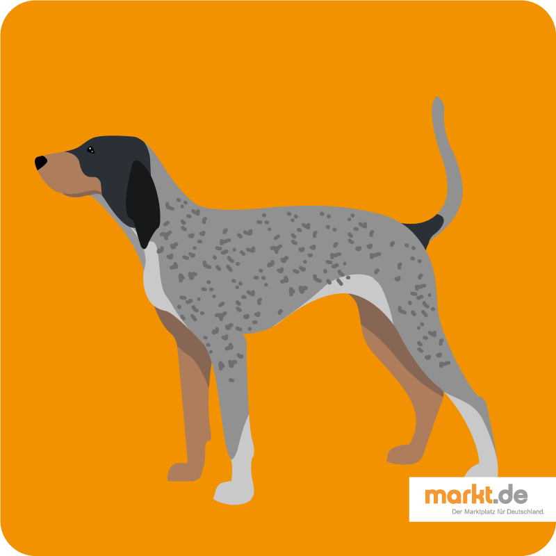 Bild Bluetick Coonhound
