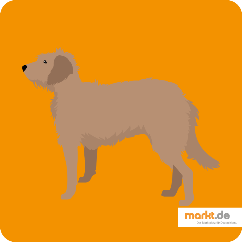Bild Bosnischer Rauhhaariger Laufhund
