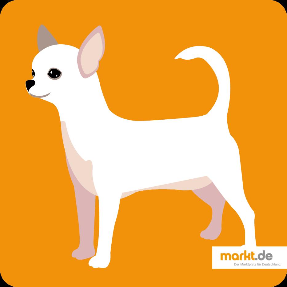 Chihuahua Rasseportrait