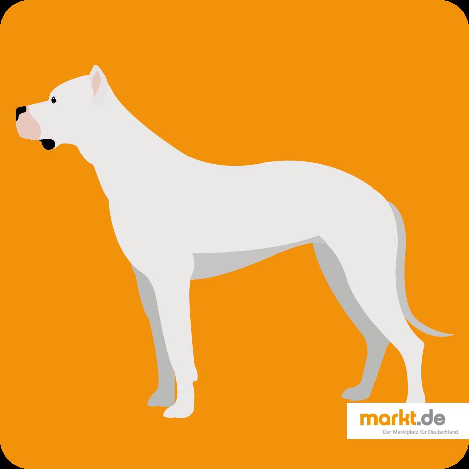 Dogo Argentino Raseportrait