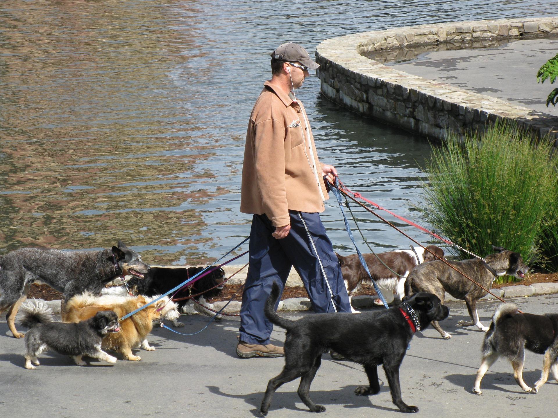 Bild Hundesitter