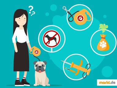 Grafik erster Hund / Pflichten Regeln