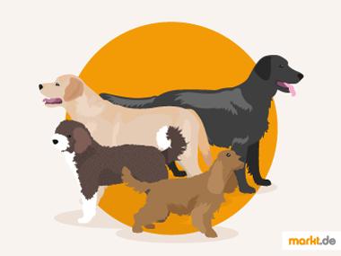 Grafik Hunderassengruppe 8