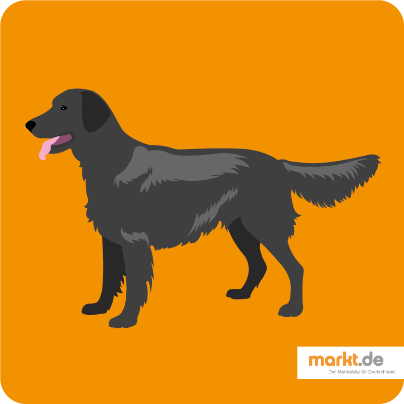 Grafik Flat Coated Retriever
