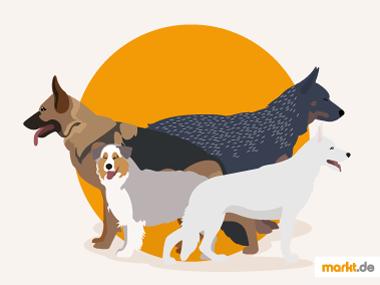 Grafik Hüte- und Treibhunde
