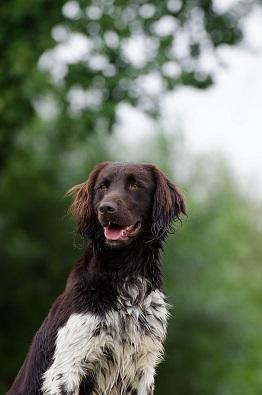 Bild Hund in der Natur