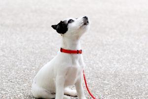 Bild Hund an der Leine