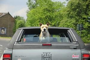 Hund im Auto.