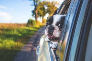 Hund in Auto / Tierhaare