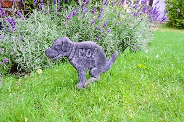 Hundeverbotsschild im Garten