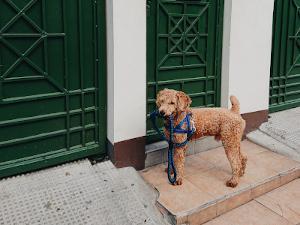 Hund mit Geschirr und Leine