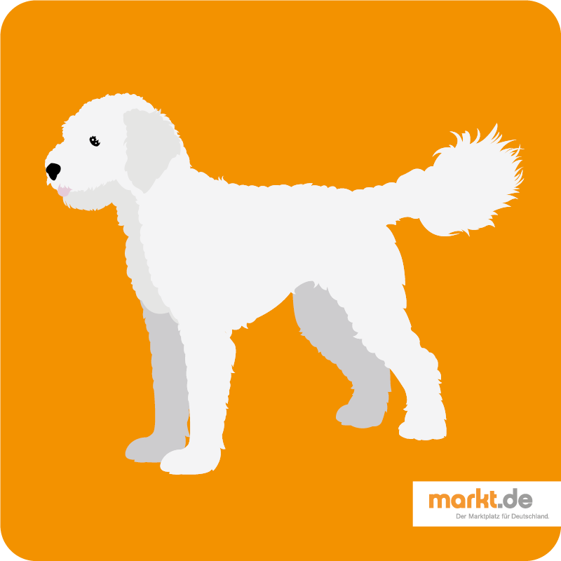 Grafik Goldendoodle