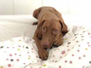 Hund Im Schlafzimmer Darf Ein Hund Mit Ins Bett Marktde