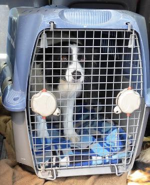 Bild Hund in Transportbox