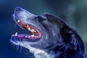 Hundekopf im Portrait