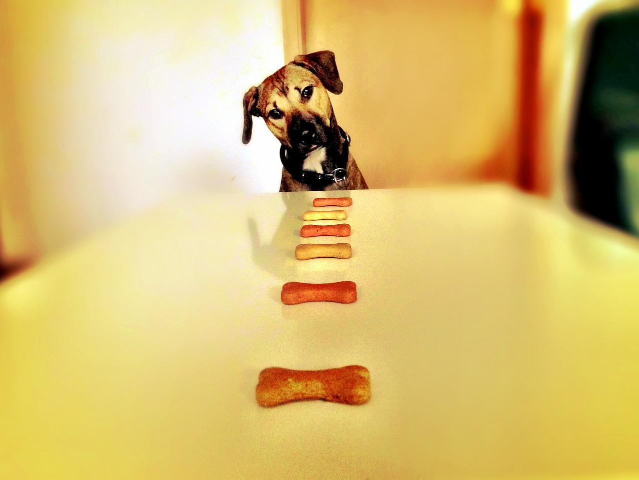 Bild Hund mit Leckerli