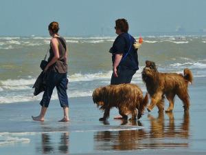 Hunde Meer Strand