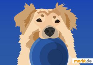 Bild Hund mit Napf