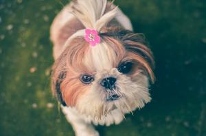 Ausgefallene Hundefrisuren Fur Jeden Anlass Markt De