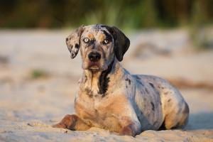Hund an Strand bei Hitze