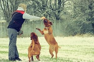 Bild Frau spielt mit Hunden