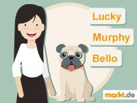 Grafik Hund adoptieren