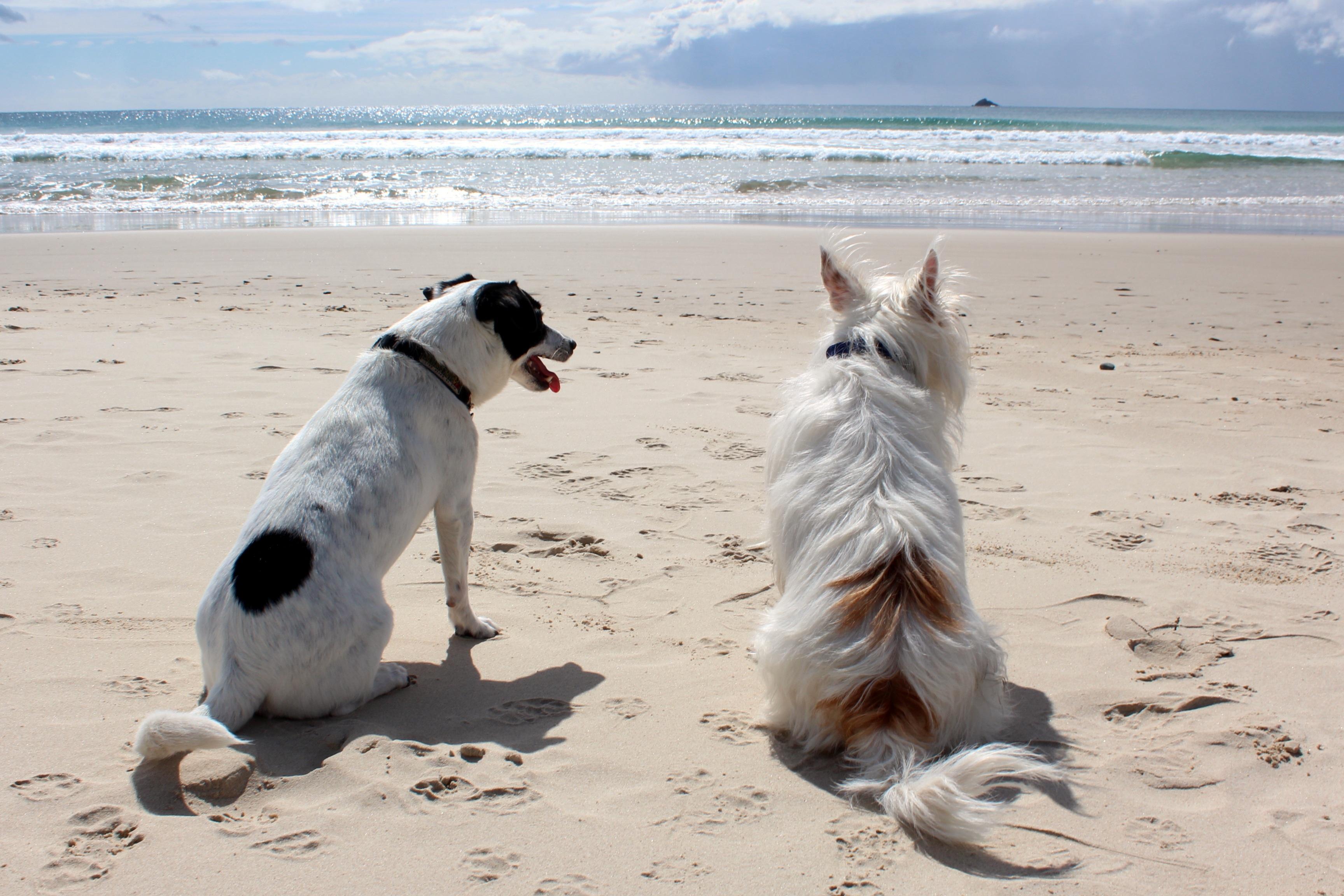 Bild Hunde am Strand