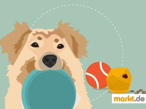 Bild Spielen und Sport mit Hund