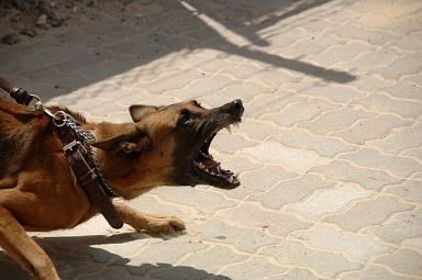 hundeführerschein hessen