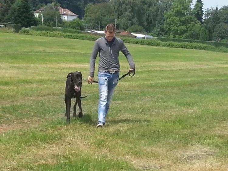 Gassigehen mit Hund