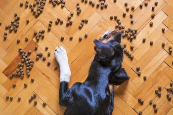 Hund isst vom Boden