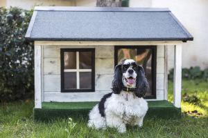 DIY Hundehütte selber bauen | markt.de